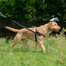 Freedom harness helps prevent pulling on leash