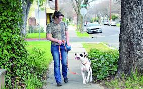 Teach dog to walk on leash without pulling