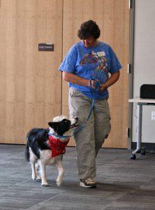 Dog Heeling