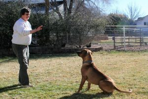 Teaching dog to stay