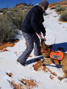 SAR dog with tug reward