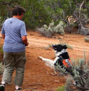 K9 SAR dog has found subjuct.