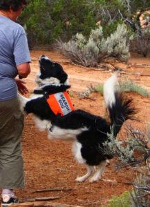 K9 SAR dog indicates he has found subject