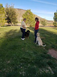 Dogs greeting politely