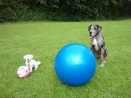 dogs with treiballs