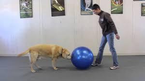 dog pushing ball