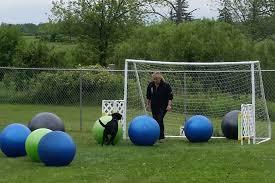 treiball dog pushing ball into goal