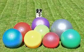dog sitting calmly with balls
