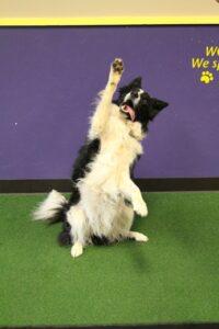 Good Times Dog Training